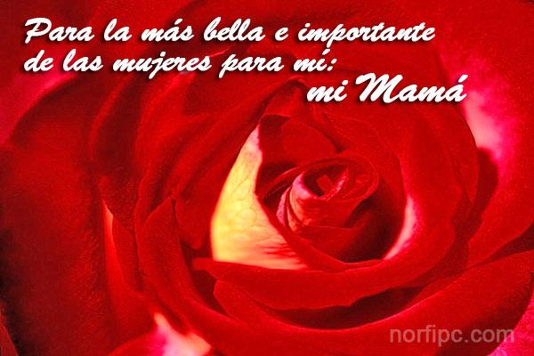 mama feliz dia