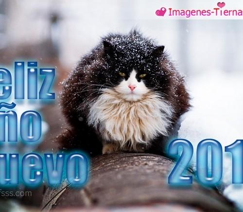 Las mejores imagenes de Feliz año nuevo 2013 - 27