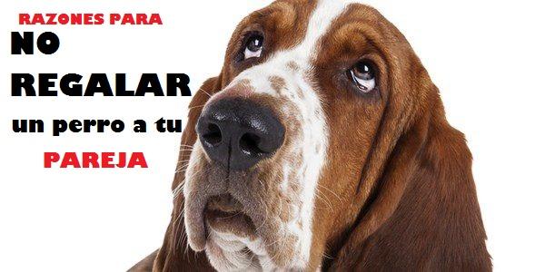 no regales perros