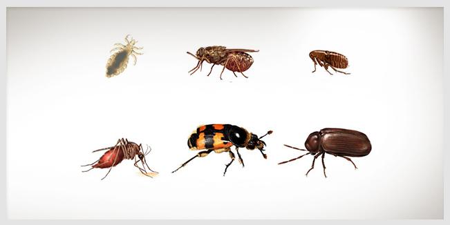 5 consejos naturales para eliminar los insectos de tu hogar - Eliminar insectos en casa ...